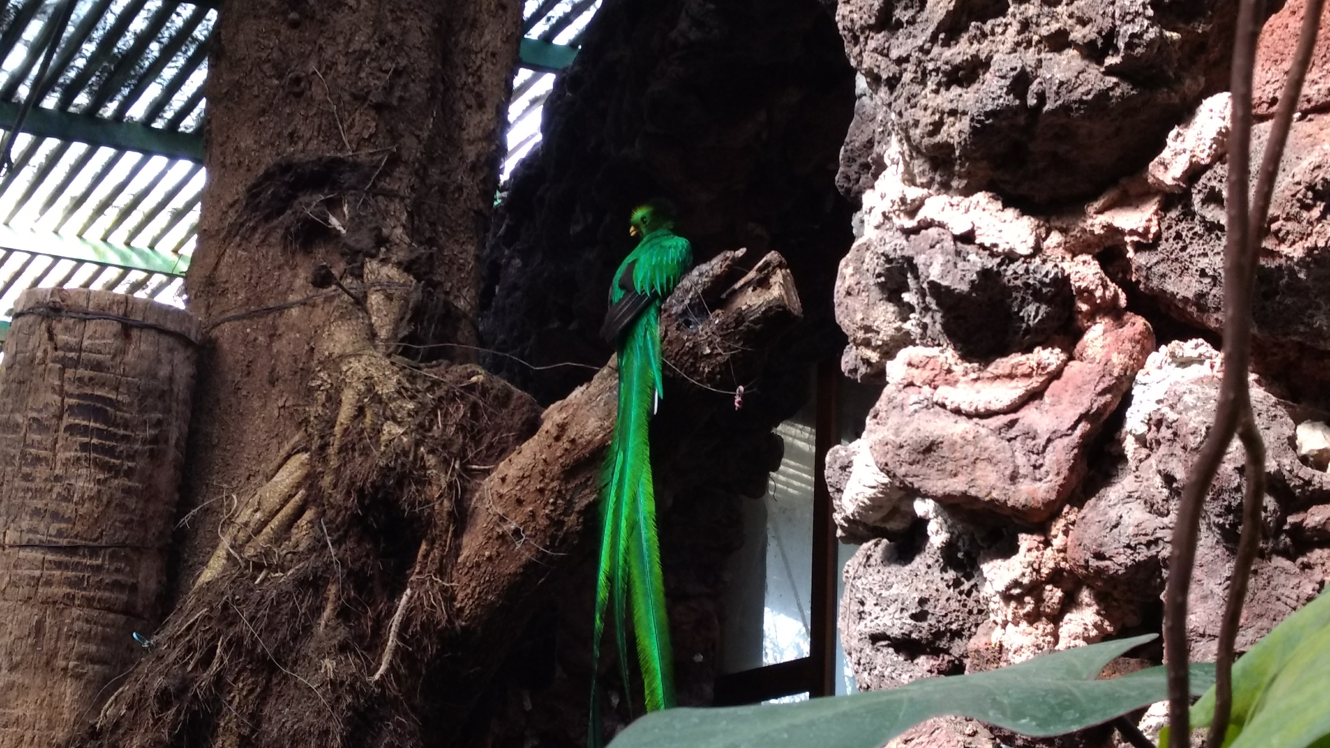 Quetzal en El Nido
