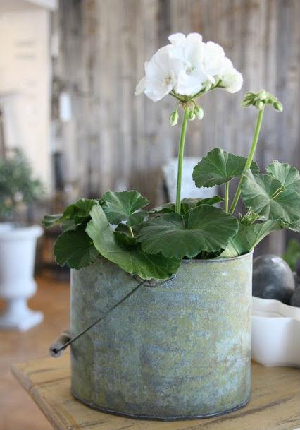 Planta facil de cuidar excellent plantas faciles with - Planta exterior resistente ...