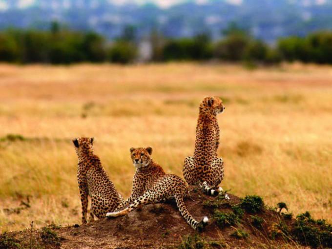 Tanzania, África. Ahora que, si tienes un espíritu más salvaje, un buen destino para luna de miel es Tanzania; disfrutar de la fauna de este lugar hará que corra la adrenalina por las venas.