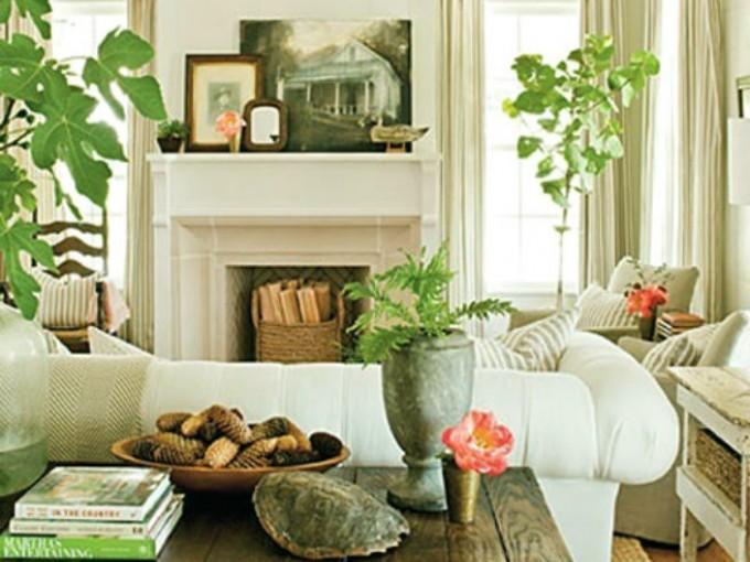Plantas esquineras en tu casa me lo dijo lola for Como decorar plantas con piedras