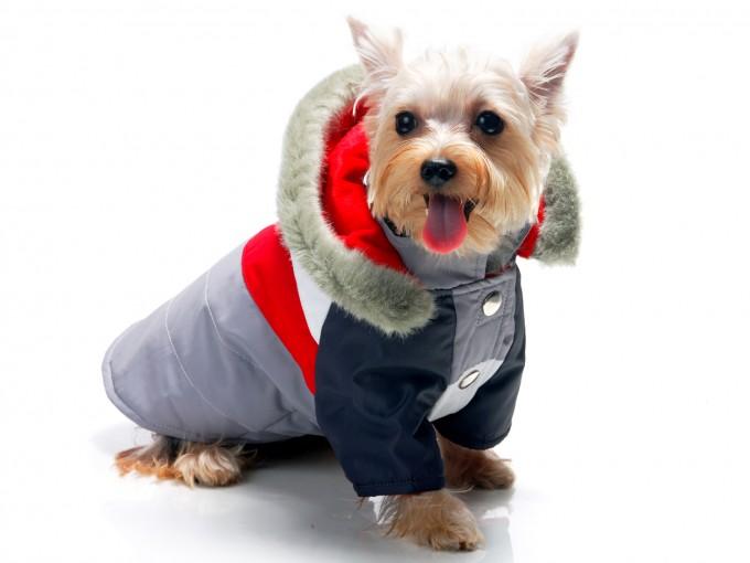 C mo hacer ropa para perro me lo dijo lola for Construir piscina para perros