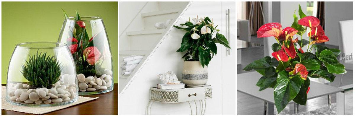 6 plantas de interiores con flores que te encantar n me for Plantas decorativas para oficina
