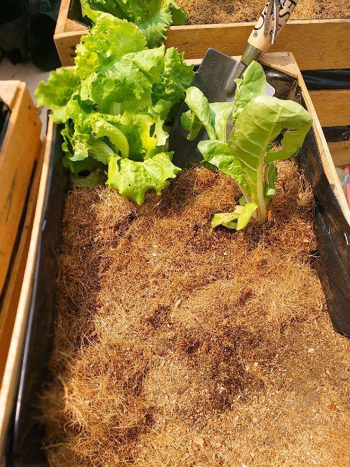 diy huerto organico con huacales