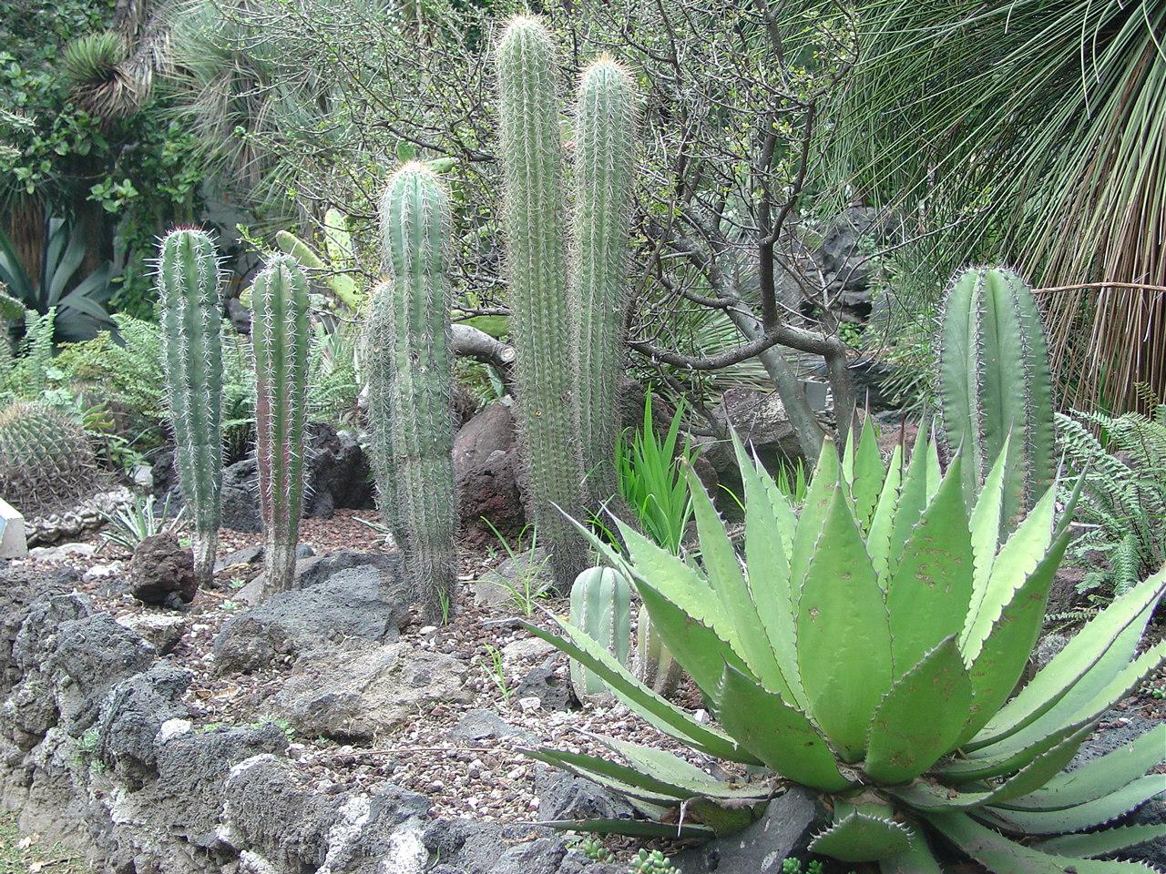 Jardín Botánico UNAM  Me lo dijo Lola