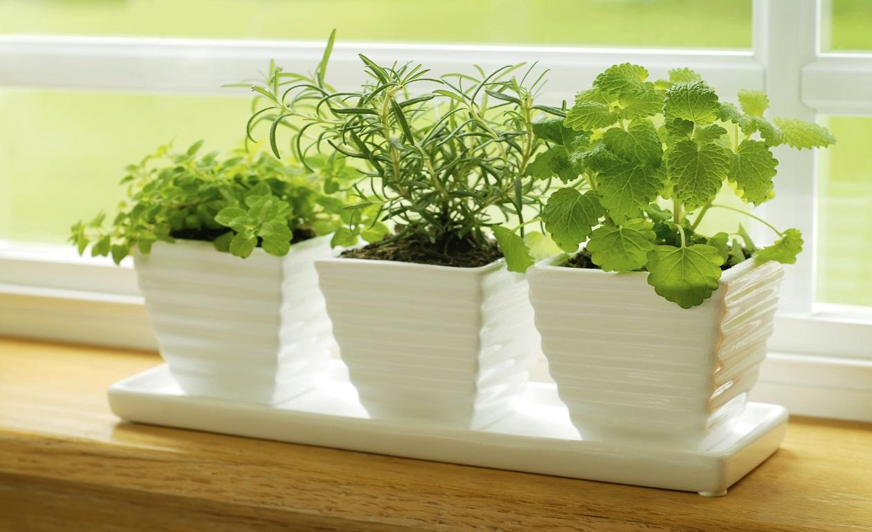 D nde y c mo colocar plantas en tu casa me lo dijo lola - Plantas para decorar interiores ...