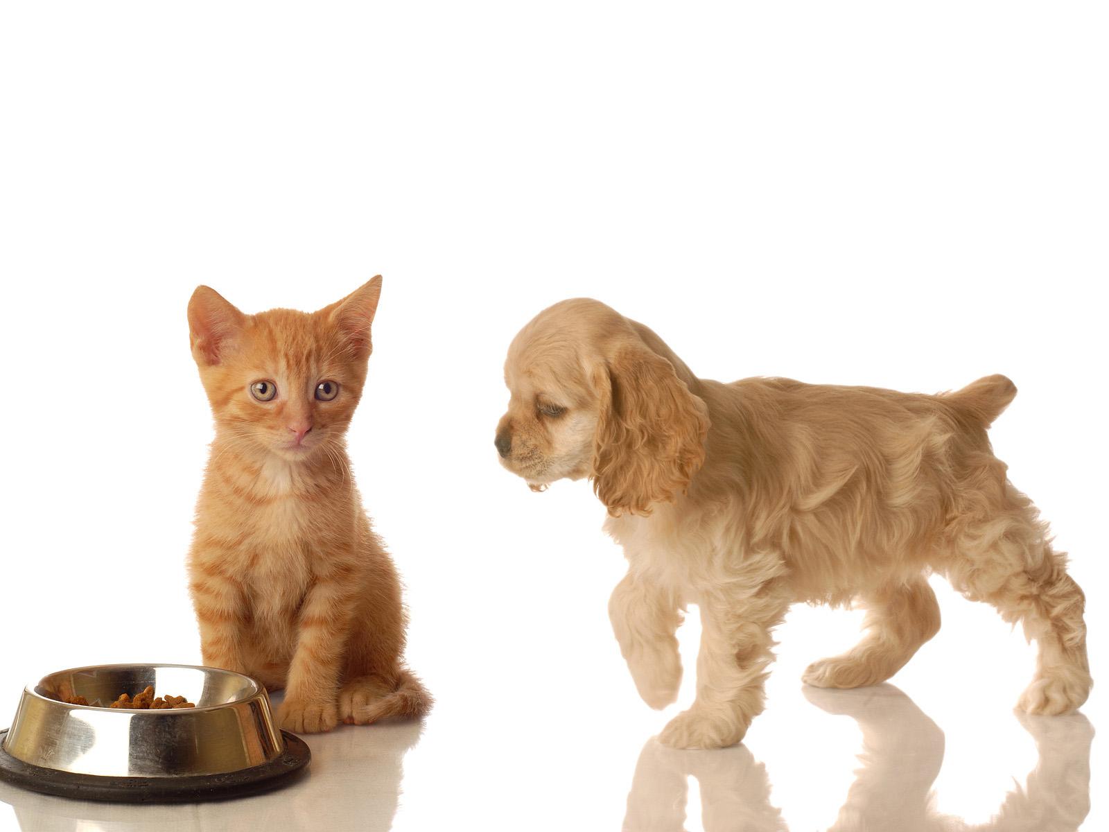 Ponle onda a tu mascota me lo dijo lola for Ahuyentar gatos de mi jardin