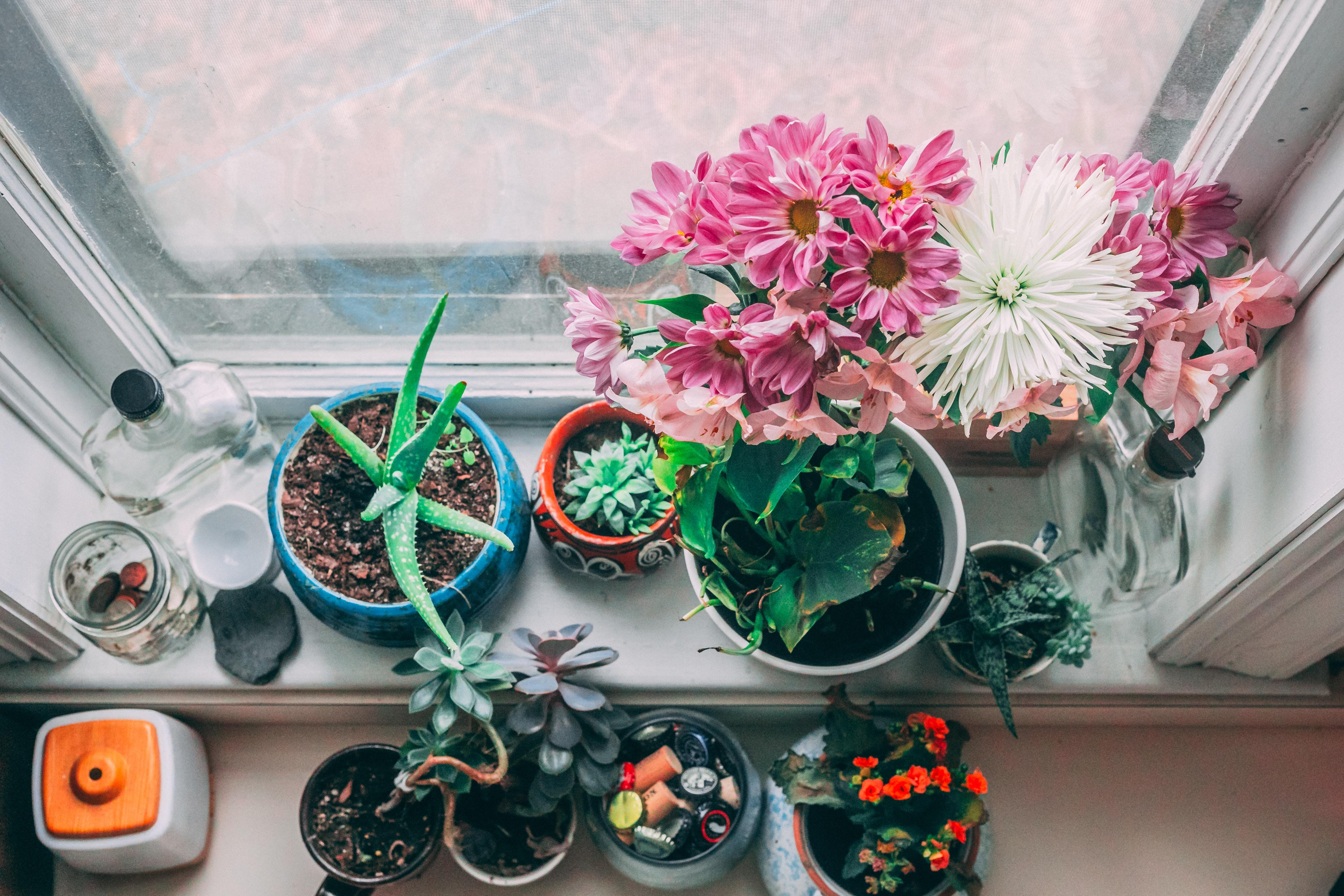 Plantas De Interiores Que Necesitan Pocos Cuidados