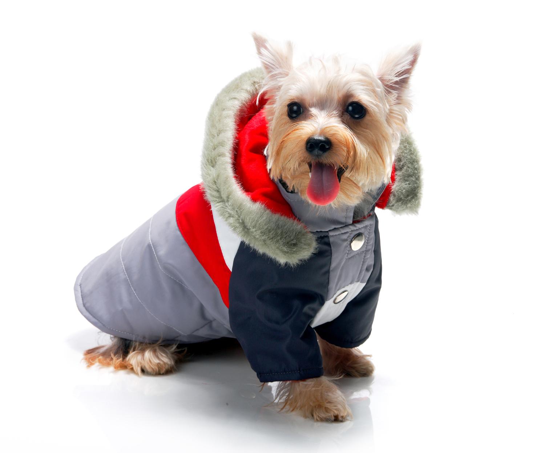 C mo hacer ropa para perro me lo dijo lola for Accesorios para mascotas