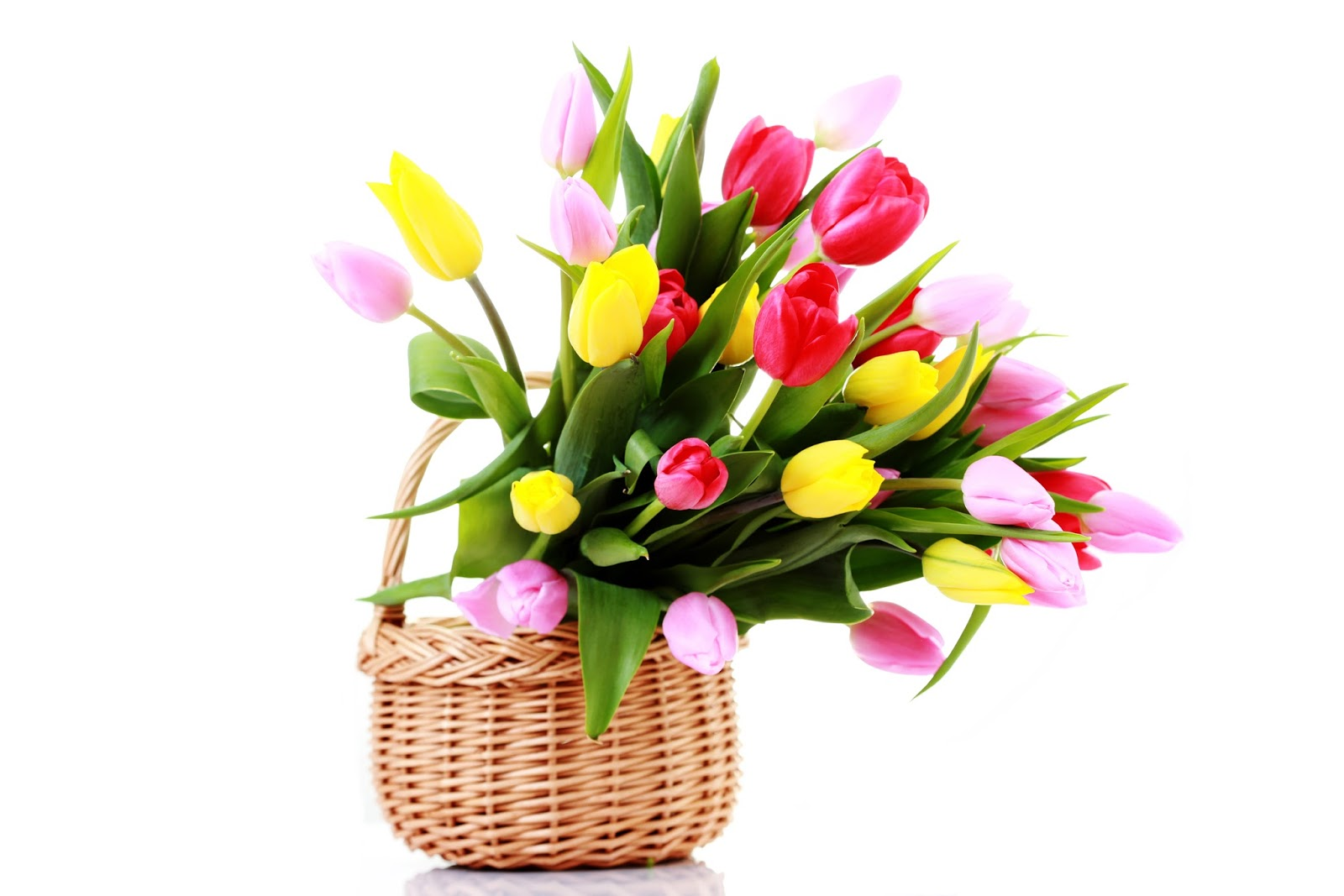 Flores De Temporada Me Lo Dijo Lola
