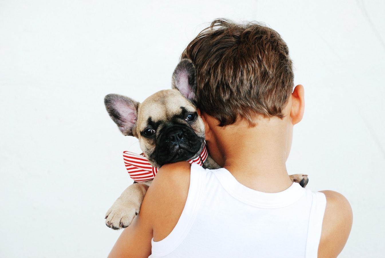 Elige una mascota de acuerdo a la personalidad de tu hijo