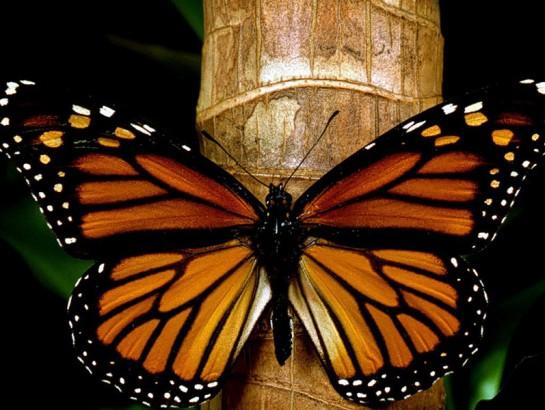 El País de la Monarca, para los fanáticos de las mariposas