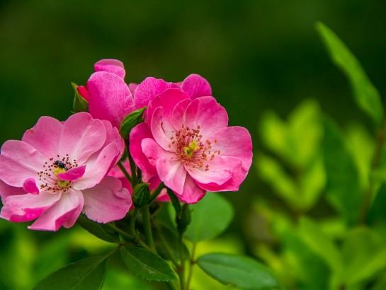 ¿Cuál es el significado de las flores y plantas en rituales mágicos?