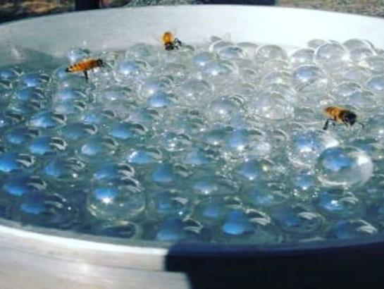 Ayuda a las abejas a tomar agua con este bebedero hecho en casa