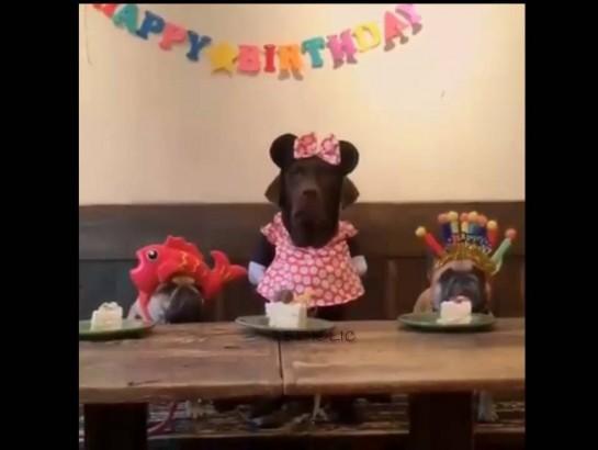 De perros y pasteles: ¡celebró su cumpleaños y su reacción es muy divertida!