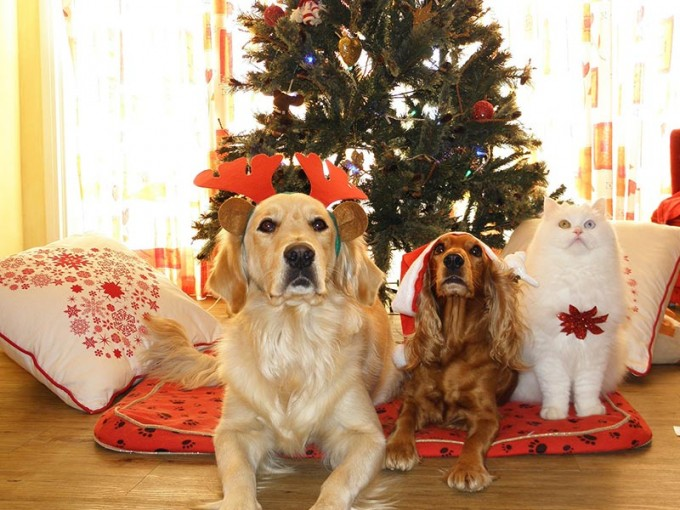 Cómo elegir el mejor árbol de Navidad