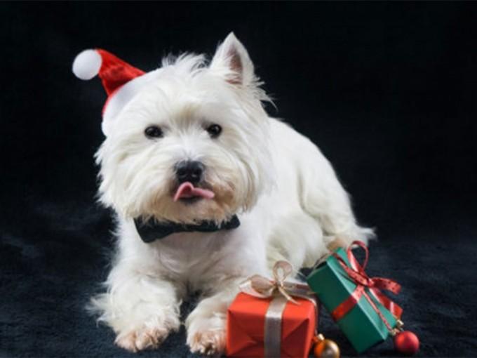 lomito, perro, mascota, regalos, navidad, que le regalo a mi perro, excelsior, noticias, mexico, mascotas, amor, animales, flipboard, noticias de hoy,