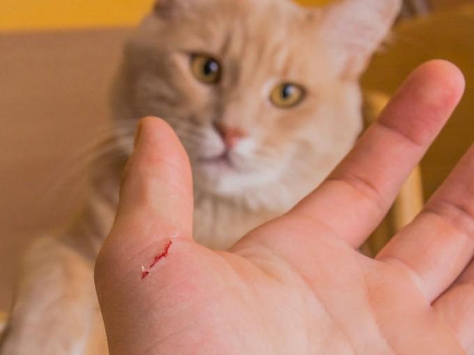 ¡Cuidado con los arañazos de tu gato! Podrían causarte disfunción eréctil.../ Cortesía iStock