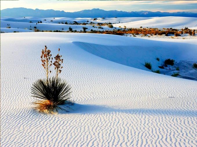 Cuatrociénegas, Coahuila. Este lugar me encanta, sus dunas blancas de yeso contrastan con sus estanques de agua azul. Un espectáculo al que tus ojos no podrán dar crédito. (Foto: Sección amarilla).