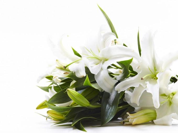 Los lirios son flores muy aromáticas