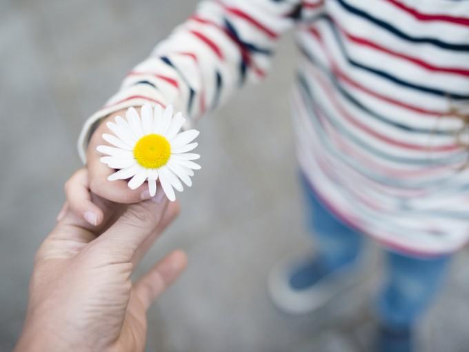 Las margaritas son de las flores más populares en el mundo y se asocian con la inocencia.
