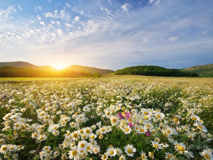 Esta flor se ha insertado tanto en la cultura que no sólo es una flor, también se ha convertido en un símbolo cultural.
