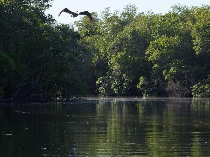 Si vas, no dejes de visitar la laguna de Manialtepec, un hermoso lugar por sus manglares y diversidad de aves.