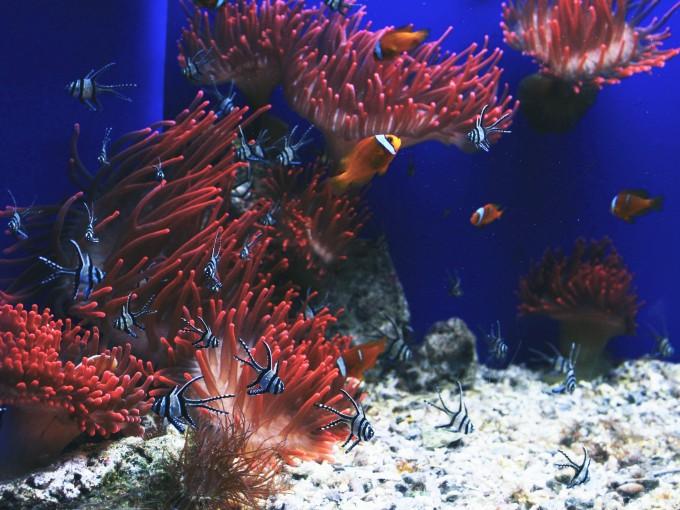 Hay muchas variedades de peces. Foto: Unsplash