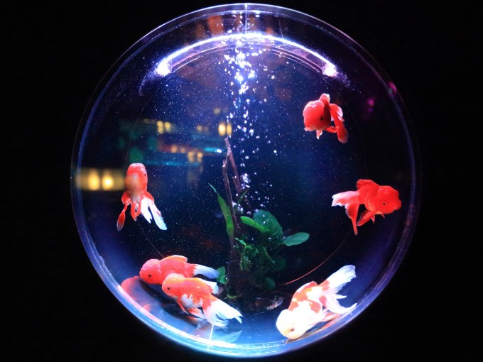 Los peces son una excelente opción para espacios pequeños Foto: Unsplash
