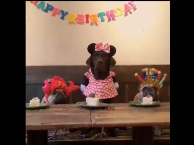 De perros y pasteles: ¡celebró su cumpleaños y su reacción es muy divertida! Foto: Youtube