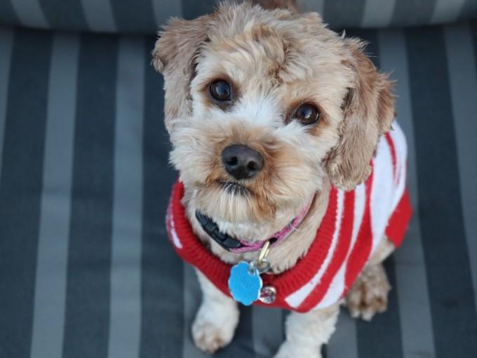 Una mascota es un miembro más de la familia Foto: Unsplash