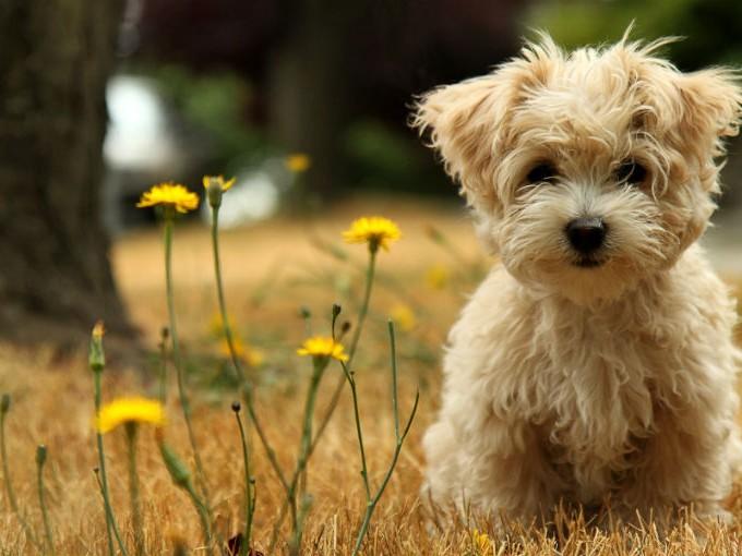 Confesiones de mamá: ¿Cómo le digo a mi hijo que no puede tener un perro nuevo?