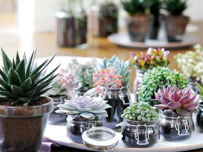 Como hacer un arreglo con plantas espectacular me lo - Composiciones de cactus ...