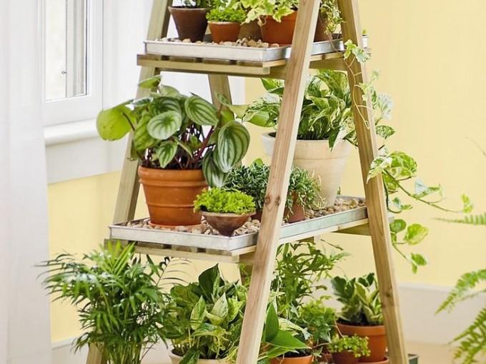 6 plantas de interiores con flores que te encantar n me for Plantas verticales de interior