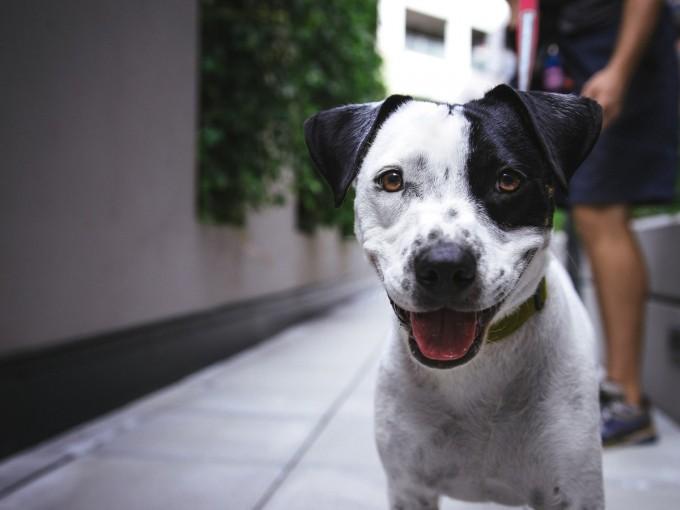 Al elegir una mascota toma en cuenta el espacio con que dispones. Foto: iStock