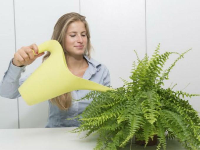 Tip para regar las plantas