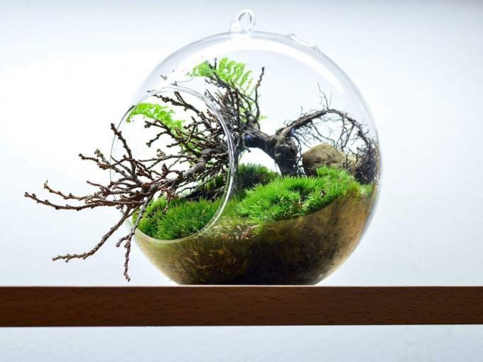 Aprende a hacer hermosos terrarios Foto: Pinterest