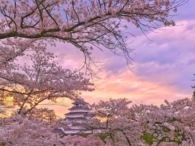Japón sigue fascinando y atrayendo a viajeros. Si deseas ver los cerezos, Tohoku es una gema perdida para vivir la experiencia.