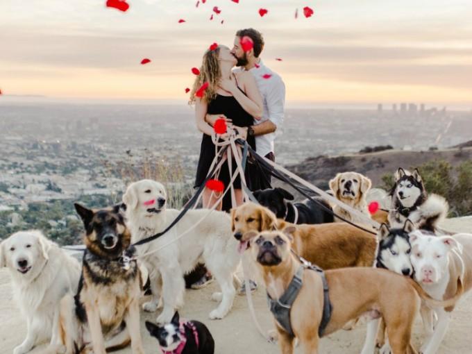 Le propuso matrimonio al lado de 16 perritos y es la MEJOR propuesta del año