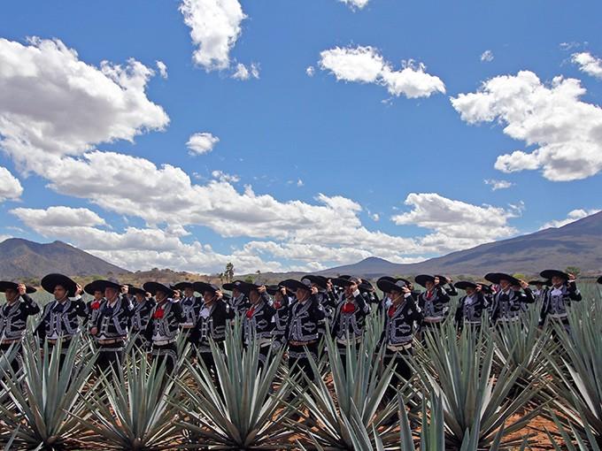 Tequila, Jalisco.- Imagina volar sobre los campos de agave azul, brindar con tequila y casi poder tocar las nubes del cielo de Tequila. El precio oscila entre 2,400 y 3,500 pesos. Foto: Archivo Cuartoscuro