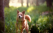 5 destinos mexicanos para vacacionar con tu mascota