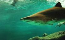 3 lugares para bucear con tiburones
