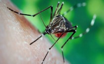 4 formas ahuyentar mosquitos