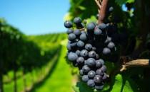5 viñedos que debes conocer