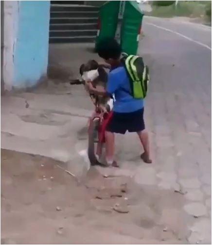 Niño pone cubrebocas a su perro / Foto: Twitter @paultutiven